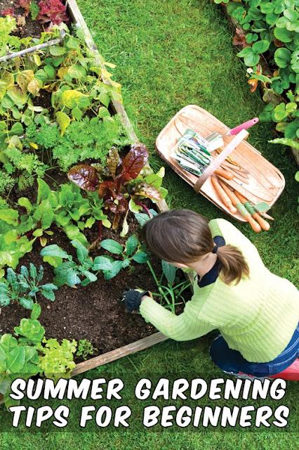 Summer gardening tips for beginners alternative gardening - Gardening tips for beginners ...