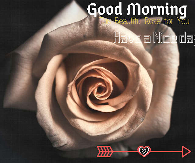 Good Morning Images with Beautiful   Rose