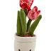 Plush Flower Plant