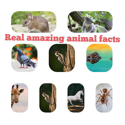 Real  amazing animal facts