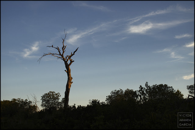fotografía, El_Saler, Valencia, naturaleza, atardecer, árbol
