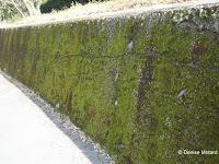 Moss-covered retaining wall, Kagoshima, Japan