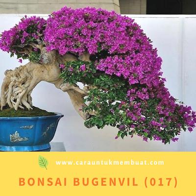 Bonsai Bugenvil (017)