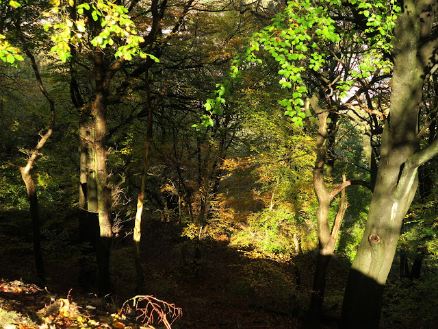 Autumn woods, Mount Pellon, Halifax, West Yorkshire. November 2nd 2020.