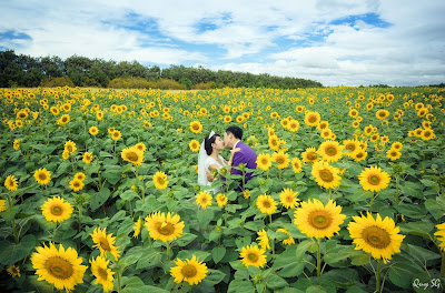 Hoa hướng dương đẹp nhất thế giới 7