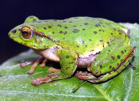 Giải mã giấc mơ thấy con Ếch & ngủ nằm mơ thấy bắt ếch