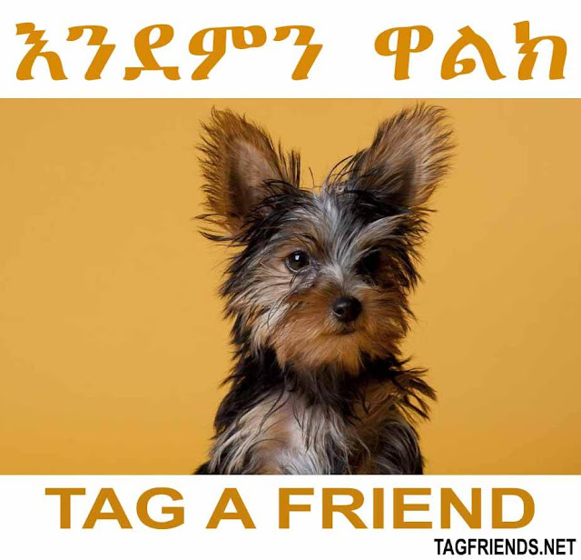 How To Say Good Afternoon In AMHARIC Language