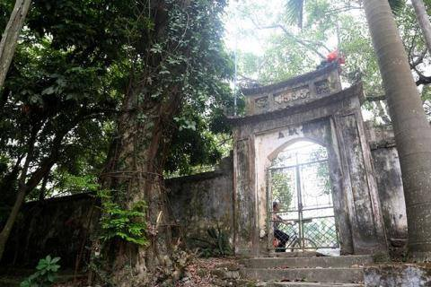 Cây sưa ở chùa Phụ Chính, xã Hòa Chính từng có người trả 100 tỷ đồng vào năm 2010