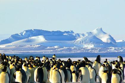 15 Fakta Menarik Tentang Antartika (Kutub Selatan)