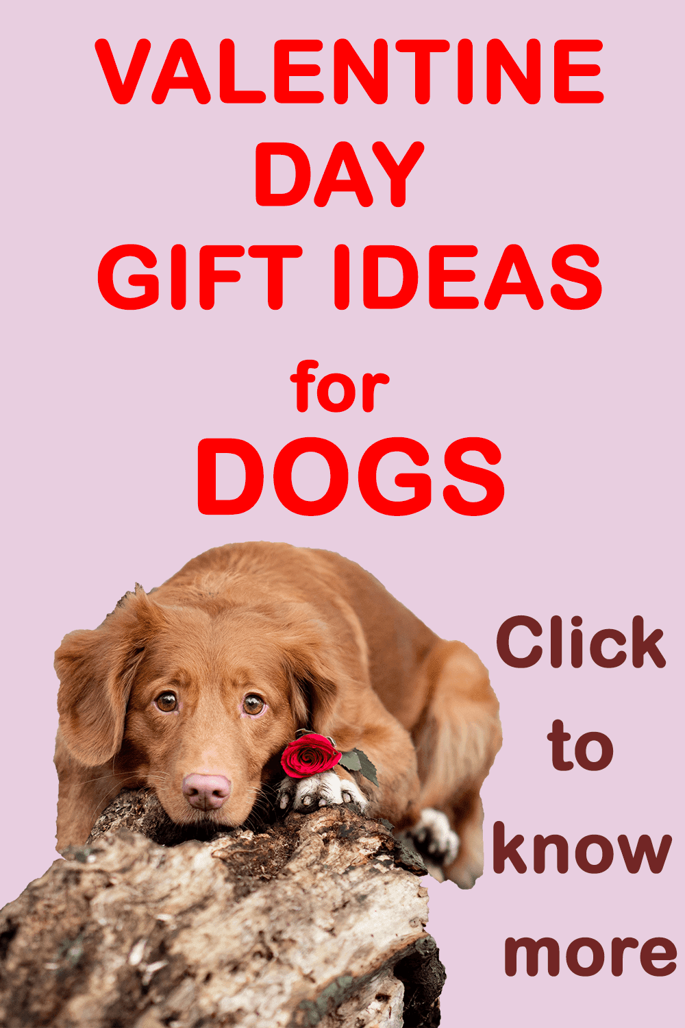 This valentine, make your dog's day extra special by involving and indulging him/her. Your dog loves you all the time every day. Make this special day his/her's too. Valentine gifts for dogs | Valentine day gifts | Valentine day for dogs | Valentine day celebration with dog | Best valentine day gift ideas for dogs