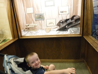 a boy in a stroller grins in front of a case displaying fossils at the Geology Museum at the South Dakota School of Mines in Rapid City, South Dakota