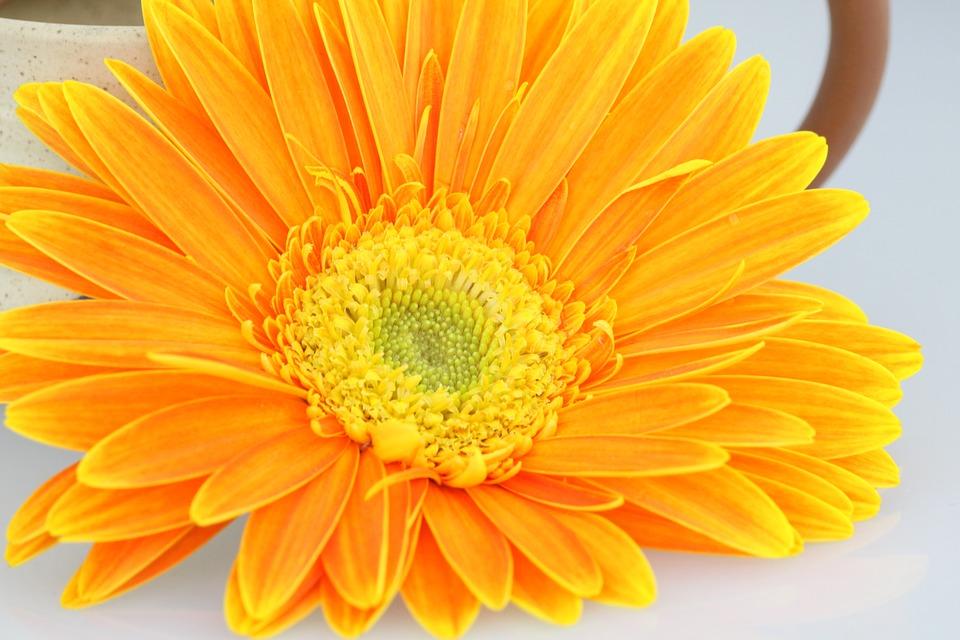 Arti Warna Pada Setiap Bunga Ely Setiawan