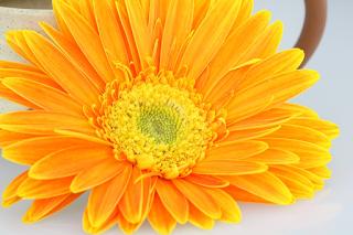 arti bunga berwarna kuning