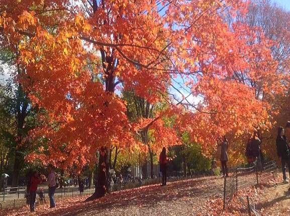 Central Park Pedicab Tours in Autumn