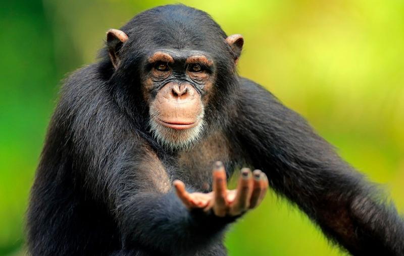 İnsan, gelişmiş bir hayvan değildir!