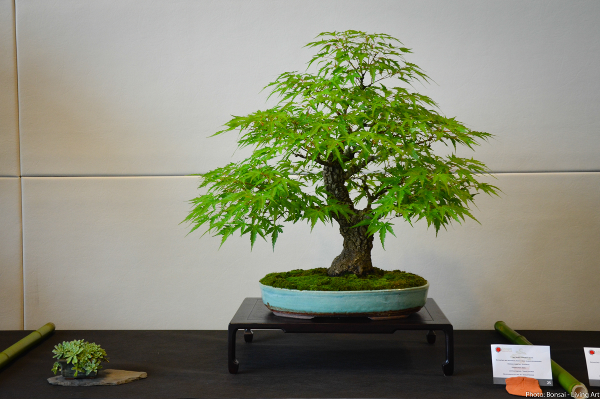 Bonsai Living Art