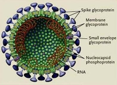 Timbulnya Coronavirus Berdasar Gambaran Klinis
