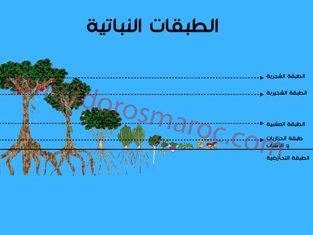 تقنية التطبق العمودي للنباتات