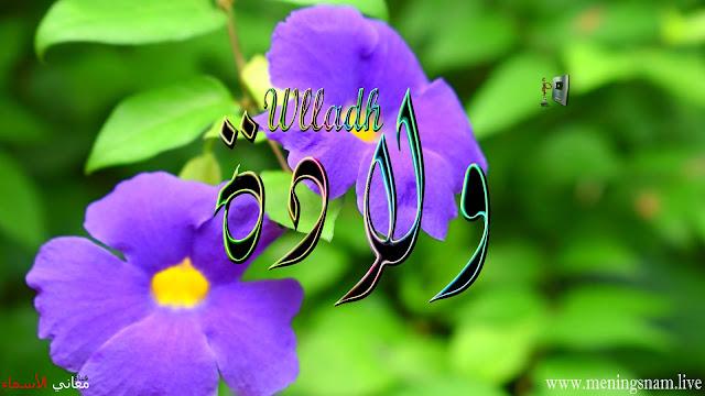معنى اسم ولادة وصفات حاملة هذا الاسم Wlladah