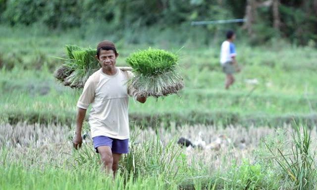 Amalan bagi Pedagang dan Petani agar Dilancarkan Usahanya oleh Allah