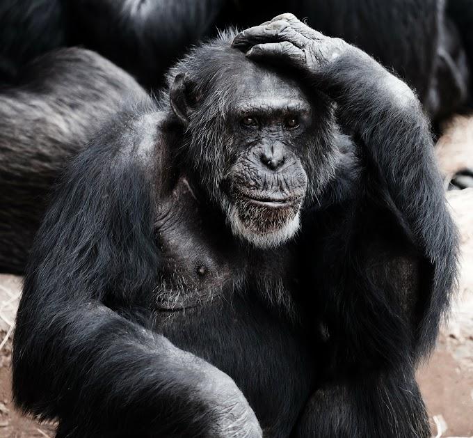 Gorilla amzaing pics | Monkey pics
