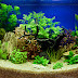 Aquascaping Beautiful Planted Tropical Freshwater Aquarium