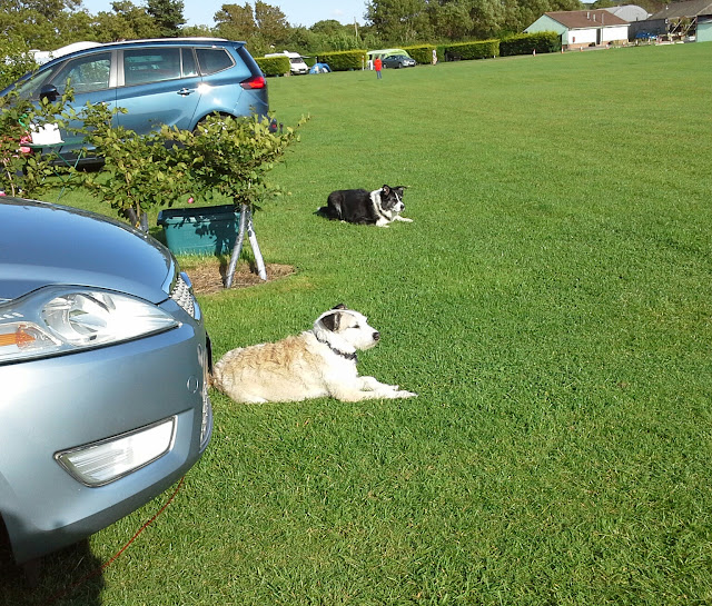 Dog Friendly Caravan Parks Agnes Waters
