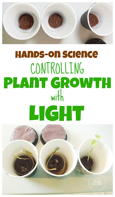See How Plant Growth is Affected by Light with this Hands-on Activity