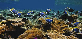 Source: Jumeirah Group. Underwater view of a reef.