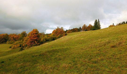 Polana nad Wierchomlą.