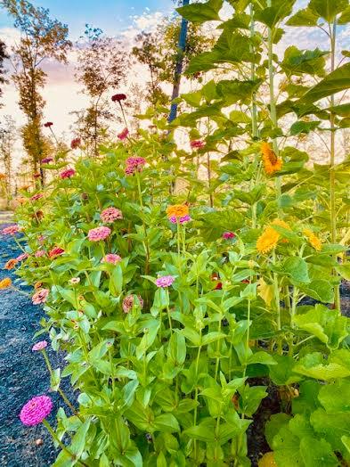 basil-lemon-garden-bouquet-athomewithjemma