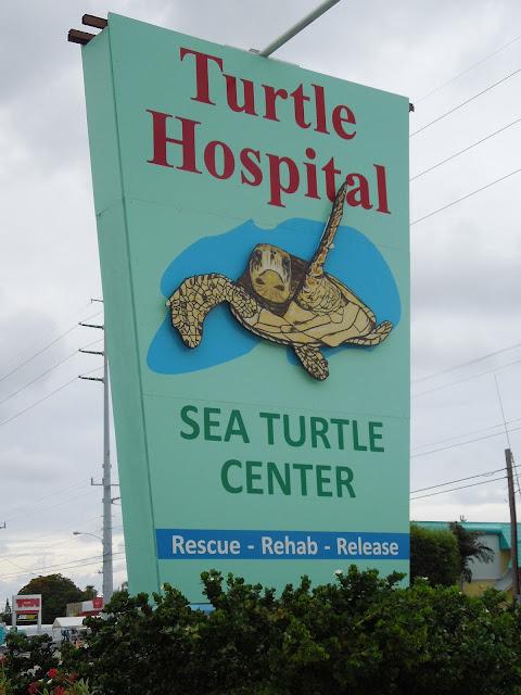 Turtle Hospital Marathon Key