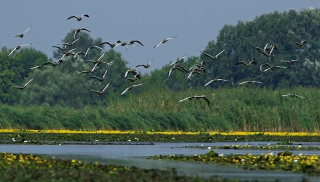 Befejeződött a Tisza-tó tavaszi feltöltése