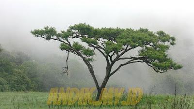 batang, fungsi batang, pengertian batang, jenis batang