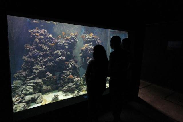 Aquário Recifal do Coral Vivo é gratuito para moradores do Sul da Bahia
