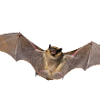 Pest or Best No. 9: The Bat