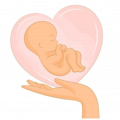 الجنين في الشهر الرابع