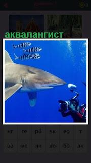 655 слов аквалангист фотографирует акулу под водой 1 уровень