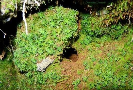 Tana ricoperta di vegetazione