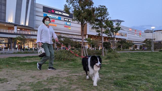 保護犬 ボーダーコリー トーマ