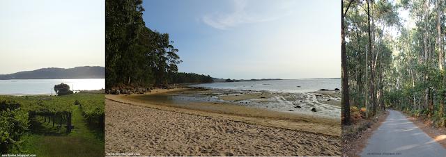Viaje a Galicia: Viñedos de camino a la playa, playa y vuelta en el bosque