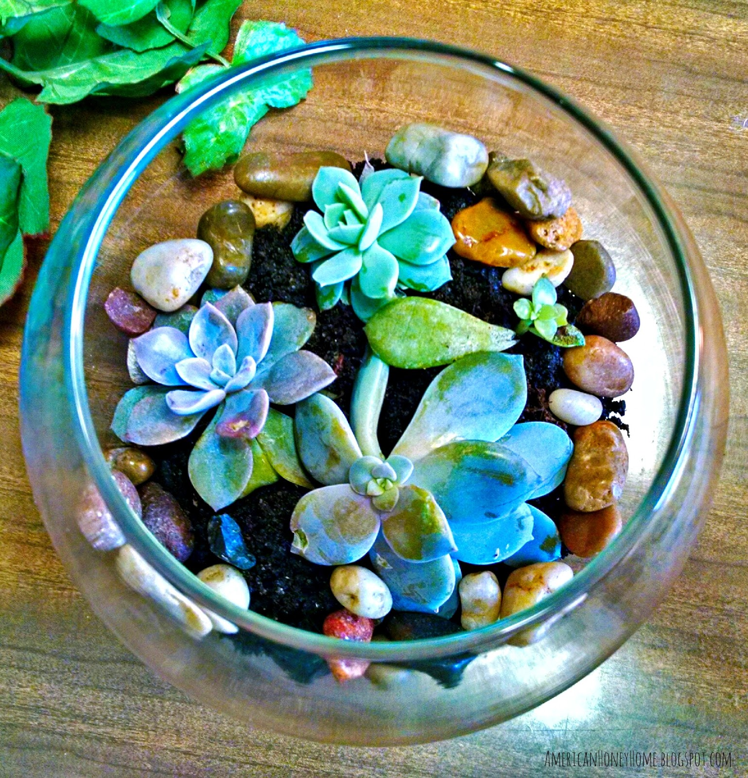 American Honey Home Dollar Store Terrarium