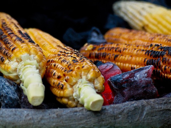 Is It Right Or Wrong To Drink Water After Eating  Bhutta (corn cob)?