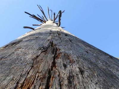 ungrounded spiritual awakening, tree, sky, dead tree
