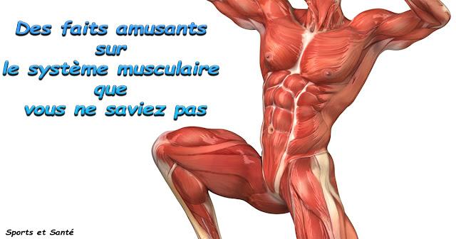 Des faits amusants sur le système musculaire que vous ne saviez pas