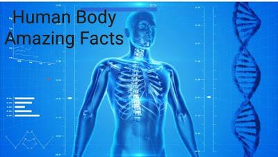 Human Body Amazing Facts मानव शरीर के 53 रोचक तथ्य