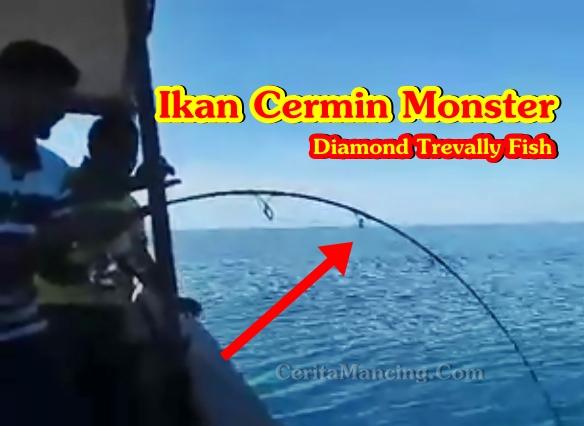 Mancing Ikan Cermin Besar Ini Baru Mantap Coi