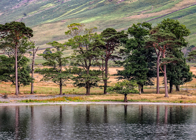 Photo of conifers reflected in Lake Buttermere