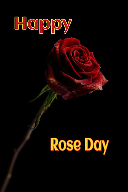 Happy rose day in bengali
