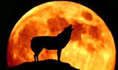La influencia lunar en animales